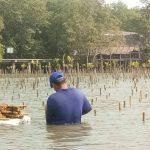 """โครงการ """"คืนดิน คืนป่า รักษาป่าชายเลน"""" ปลูกป่า 50,000 ต้น ภายในปี 2564"""